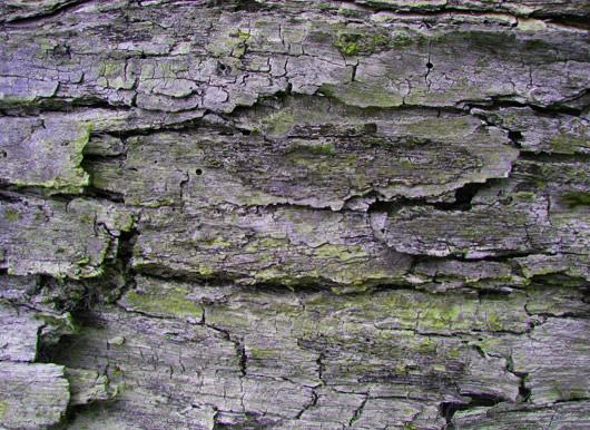 Holz Moos Texturen